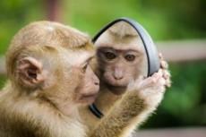 Non vedo non sento non parlo – Uccidi le tre scimmie!