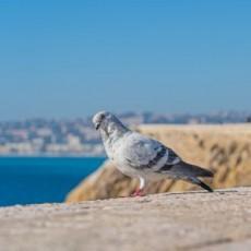 Una questione di piccioni…